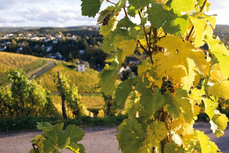 Wine Tour Including Brief Information on the City - © Weingut von Nell