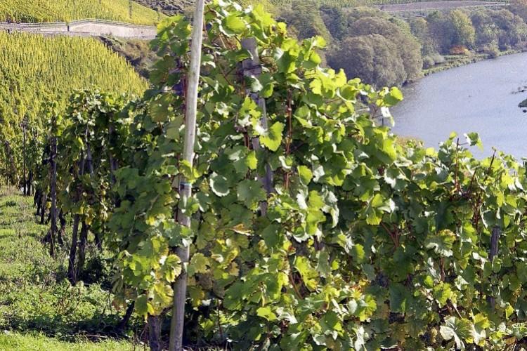 Exploitations viticoles