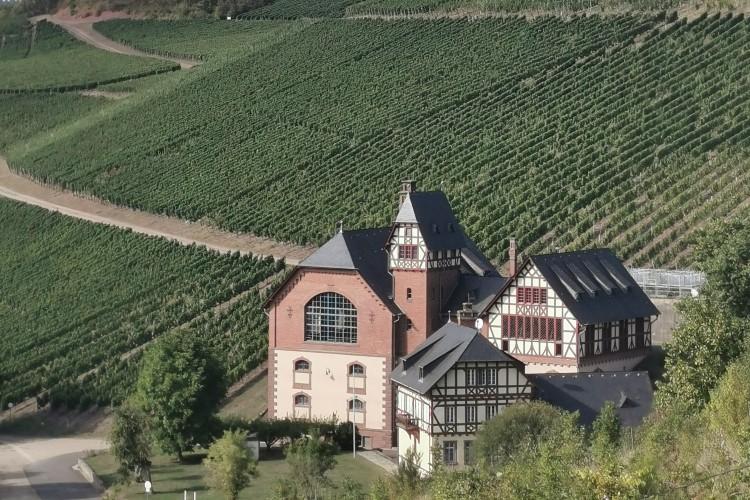 Preußen, Wein & Natur - Erleben Sie eine spannende Wanderung durch das Avelertal