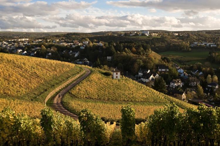 Weinkulturpfad im Herbst