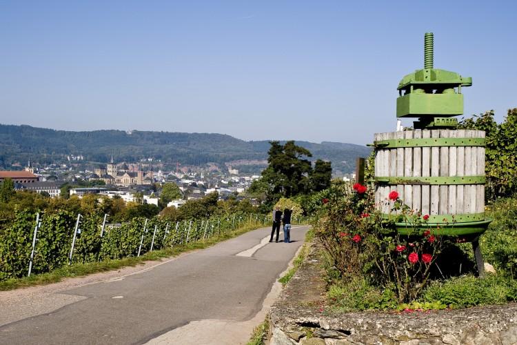 Winzerführung über den Weinkulturpfad