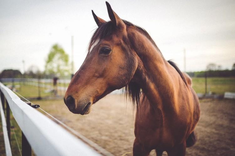Braunes Pferd (© Kaboompix/pexels.com)