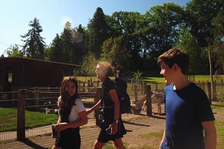 Wildschweine im Weisshauswald